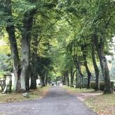 Spazierengehen im eigenen Park